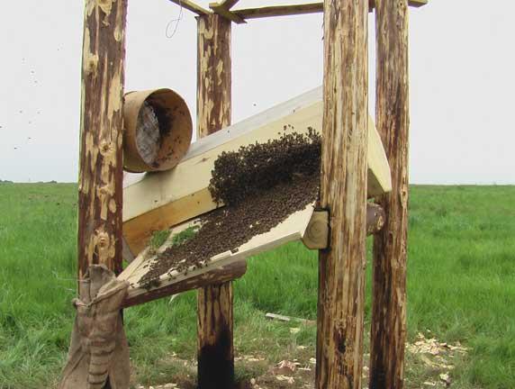 Anastasia Bijenkorf met bijen
