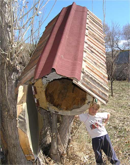 Anastasia bijenkorf boomstam