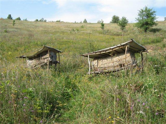 Anastasia boomstam bijenkorven in het veld