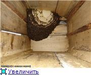 Bijen in een Anastasia bijenkorf